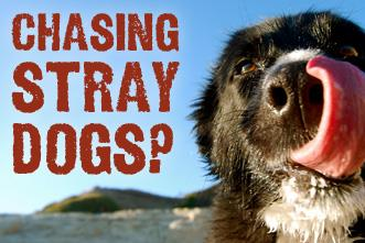 View article Pastor, Are You Chasing Stray Dogs?