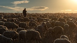 View article How To Shepherd Your Flock In A Politically Charged World
