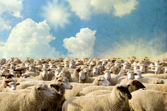 View article 10 Suggestions For The Shepherd Of A Stagnant Flock