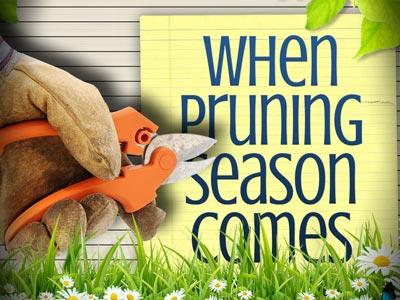 PowerPoint Template on Pruning Season