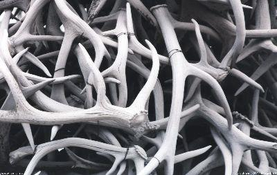 view the Image Antlers