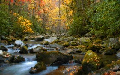 Autumn Creek Image