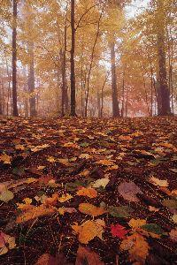 Image on Autumn Forest Floor