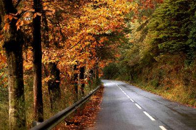 Image on Autumn Forest Road