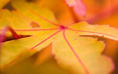 view the Image Autumn Leaf