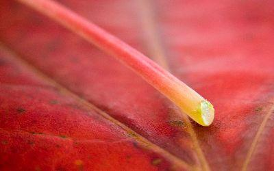 view the Image Autumn Leaf Stem