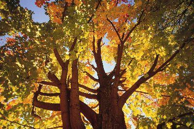 Image on Autumn Look Up