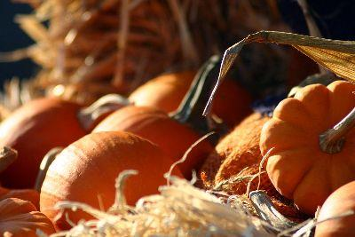 media Autumn Pumpkins