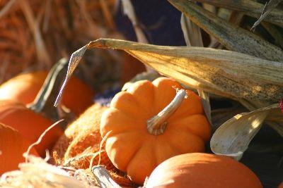 Image on Autumn Small Pumpkins