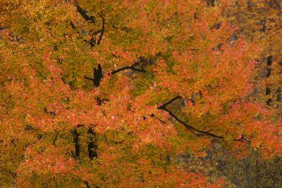 Image on Autumn Trees