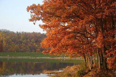 view the Image Autumn Tree Pond