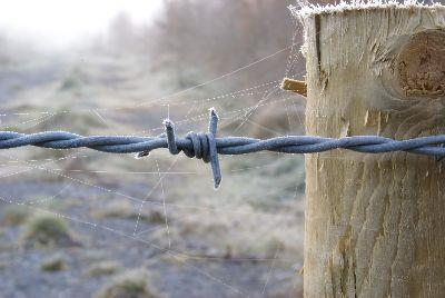 view the Image Barbed Wire Close