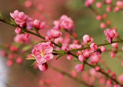 view the Image Branch Blossoms