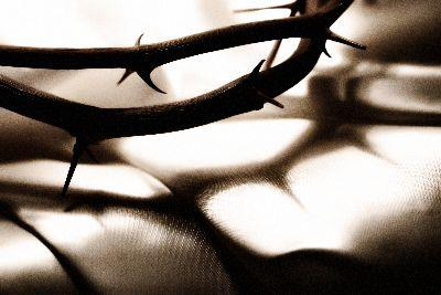 view the Image Crown Thorns Shadow
