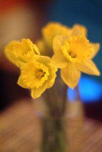 view the Image Daffodils