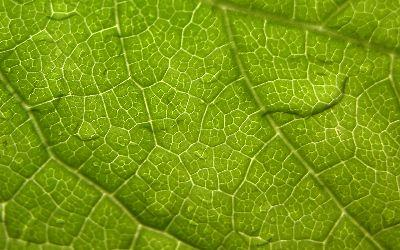 Image on Damp Leaf