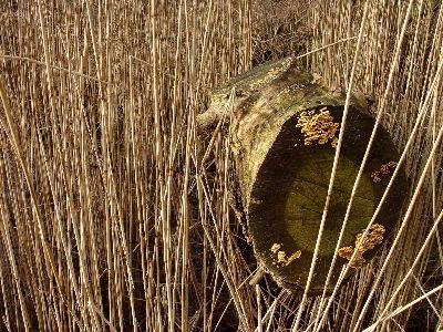 view the Image Dry Grass Log