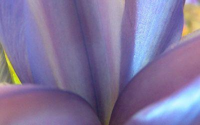 view the Image Easter Purple Petals