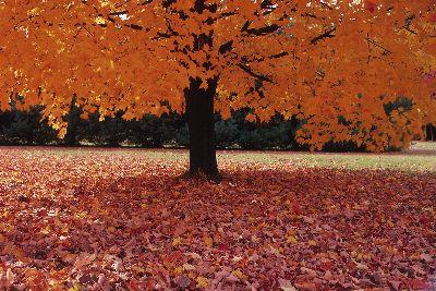 view the Image Fallen Leaves