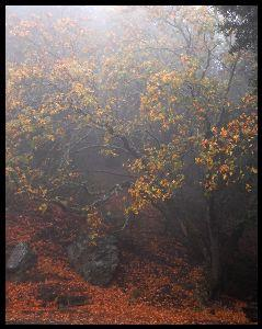 Image on Foggy Autumn