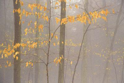 Image on Foggy Autumn Branches