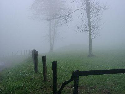 Image on Foggy Meadow Fence