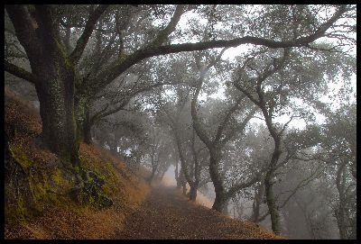 Image on Foggy Path