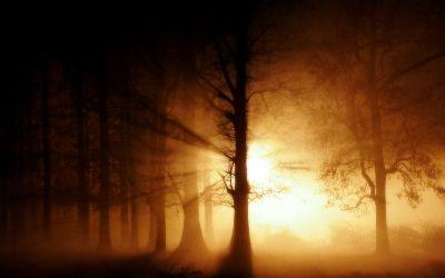 view the Image Forest Beams Light