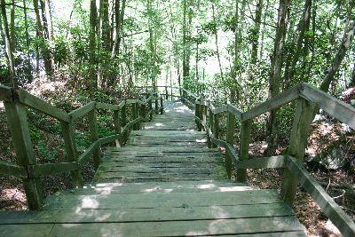 view the Image Forest Boardwalk