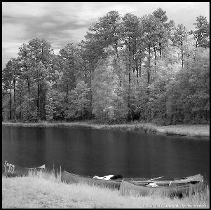 Image on Forest Lake - Black And White