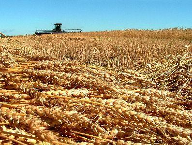 view the Image Grain Harvest