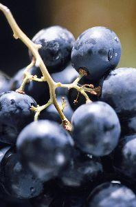 Image on Grapes