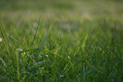 Image on Grass Sparse