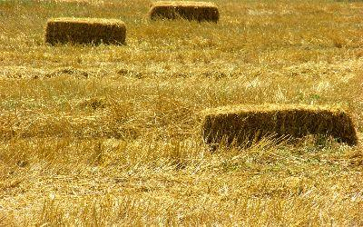 view the Image Harvest Grass
