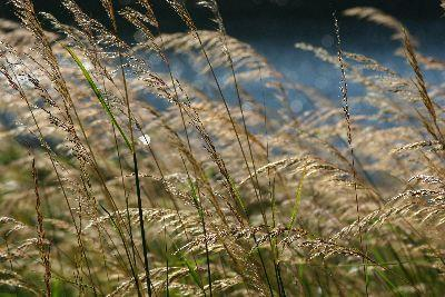 view the Image Lake Grasses