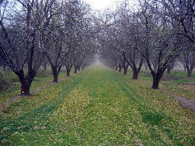 view the Image Orchard Path