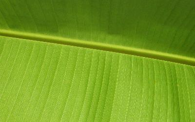 view the Image Palm Frond2