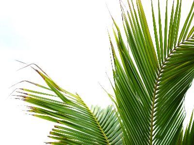 Image on Palm Fronds