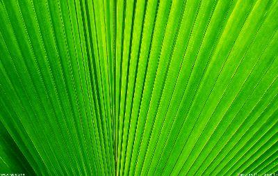 Image on Palm Frond Close
