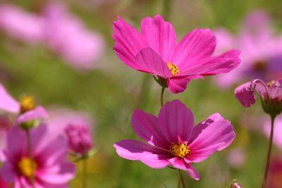 Image on Pink Ground Flowers