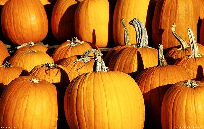 view the Image Pumpkins