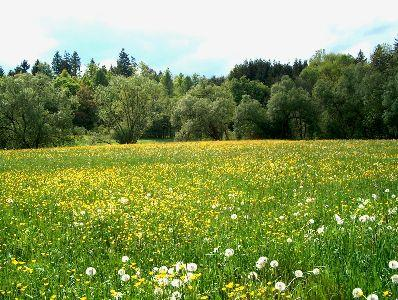 view the Image Spring Meadow