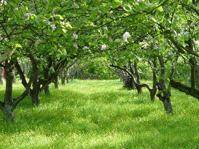 view the Image Spring Orchard