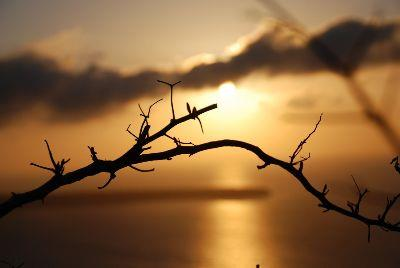 view the Image Sunset Branch