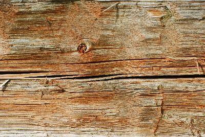view the Image Texture Wood