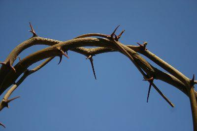 Image on Crown Of Thorns Blue Sky