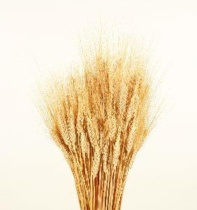 Image on Wheat Bundle