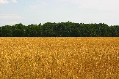view the Image Wheat Harvest