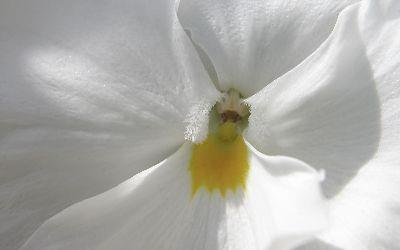 Image on White Flower Close