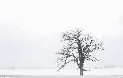 view the Image Winter Bare Tree